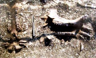 Uno dei giacimenti al momento dello scavo